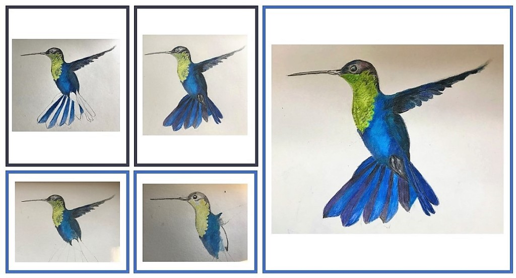 different steps in the drawing of a humming bird.
