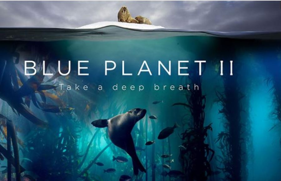 Blue Planet II promotion showing a walrus above the water and a seal underwater.