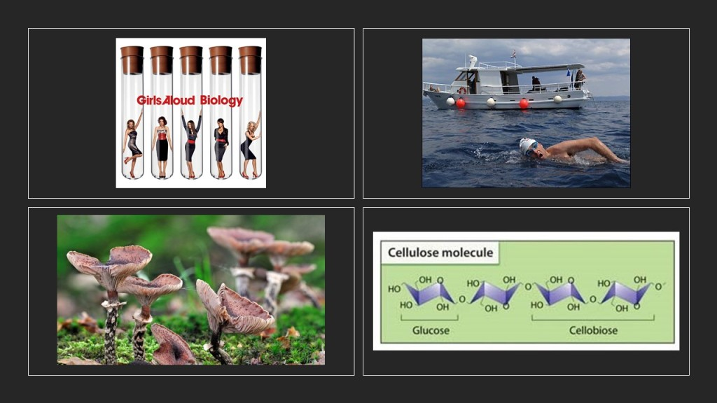 Girls Aloud, David Walliams channel swim, cellulose molecule and a honey fungus.
