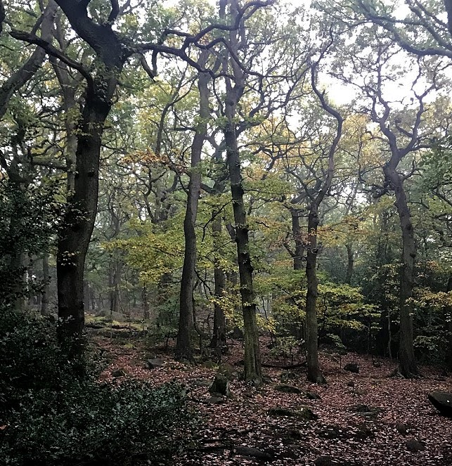 Oak woods in the Meanwood Valley in Leeds