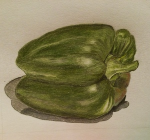 Drawing of a green pepper using coloured pencils.