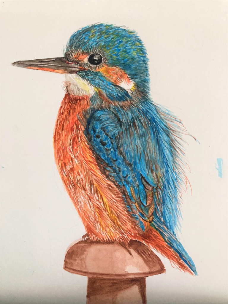 Water colour painting of a kingfisher.