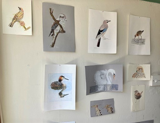 A wall of bird drawings and paintings.