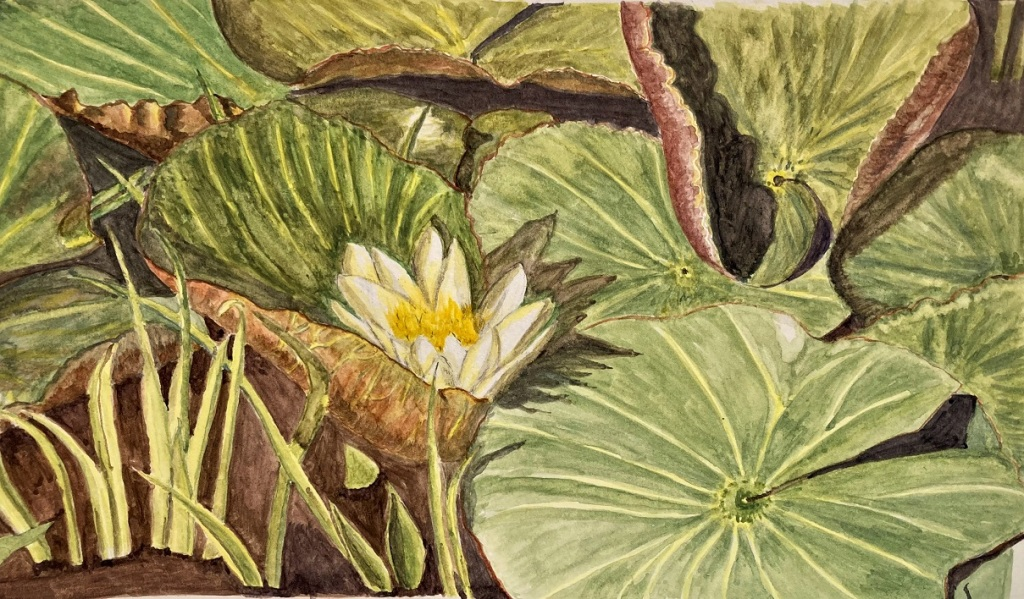 Water colour painting of a water lily on lily pads.