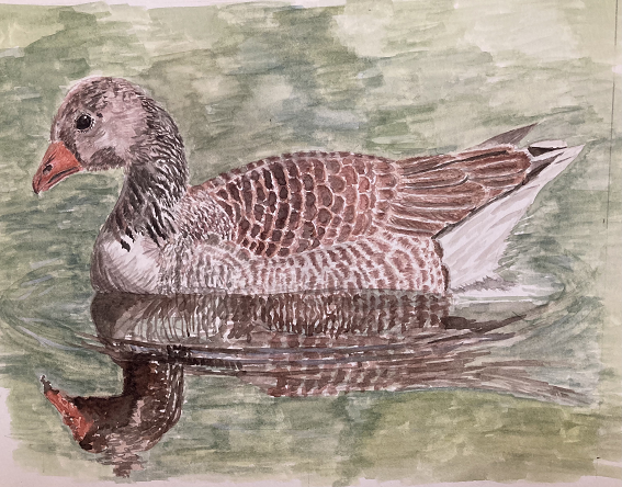 water colour image of greylag goose.