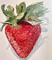 watercolour image of a strawberry