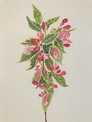 Water colour painting of a Weigela in bud.