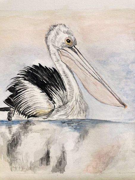 water colour painting of a pelican on a calm sea